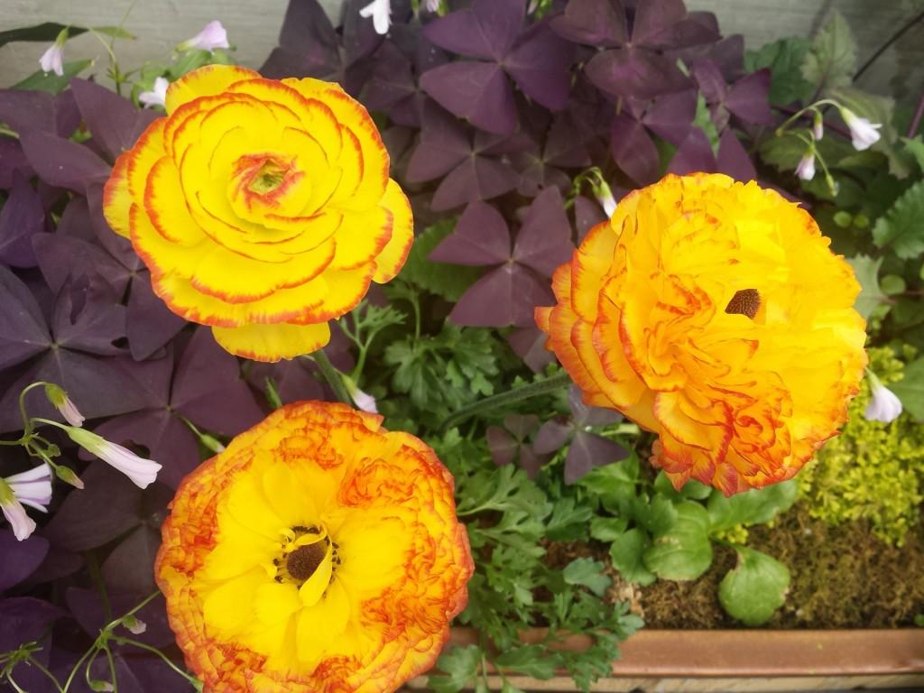 denver botanic gardens flowers