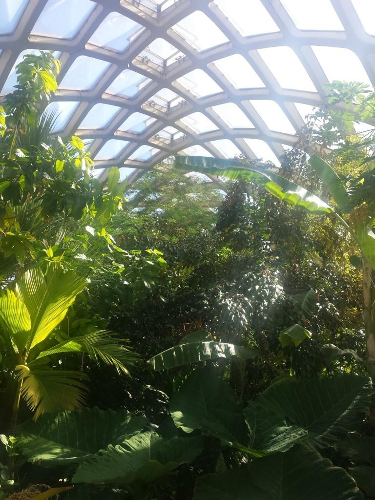 denver botanic gardens tropical conservatory
